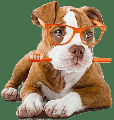 Max the cbg dog